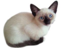 猫 猫用サプリメント 竹炭