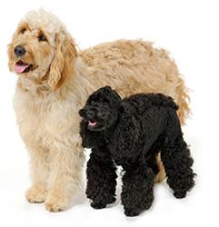 シナプス ペットサプリメント 犬 犬用サプリメント 関節